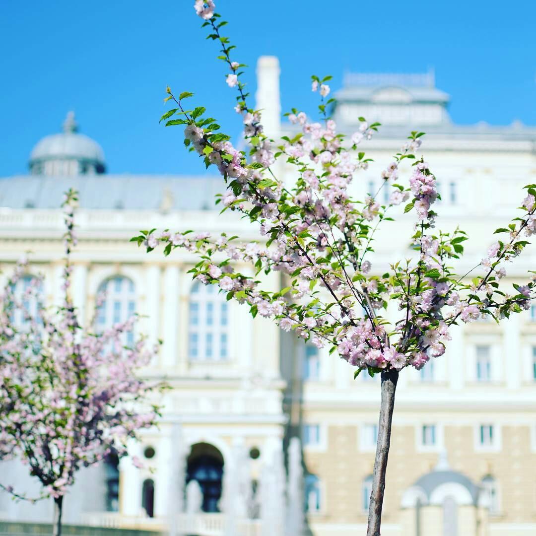 фото весна в одессе бессточное