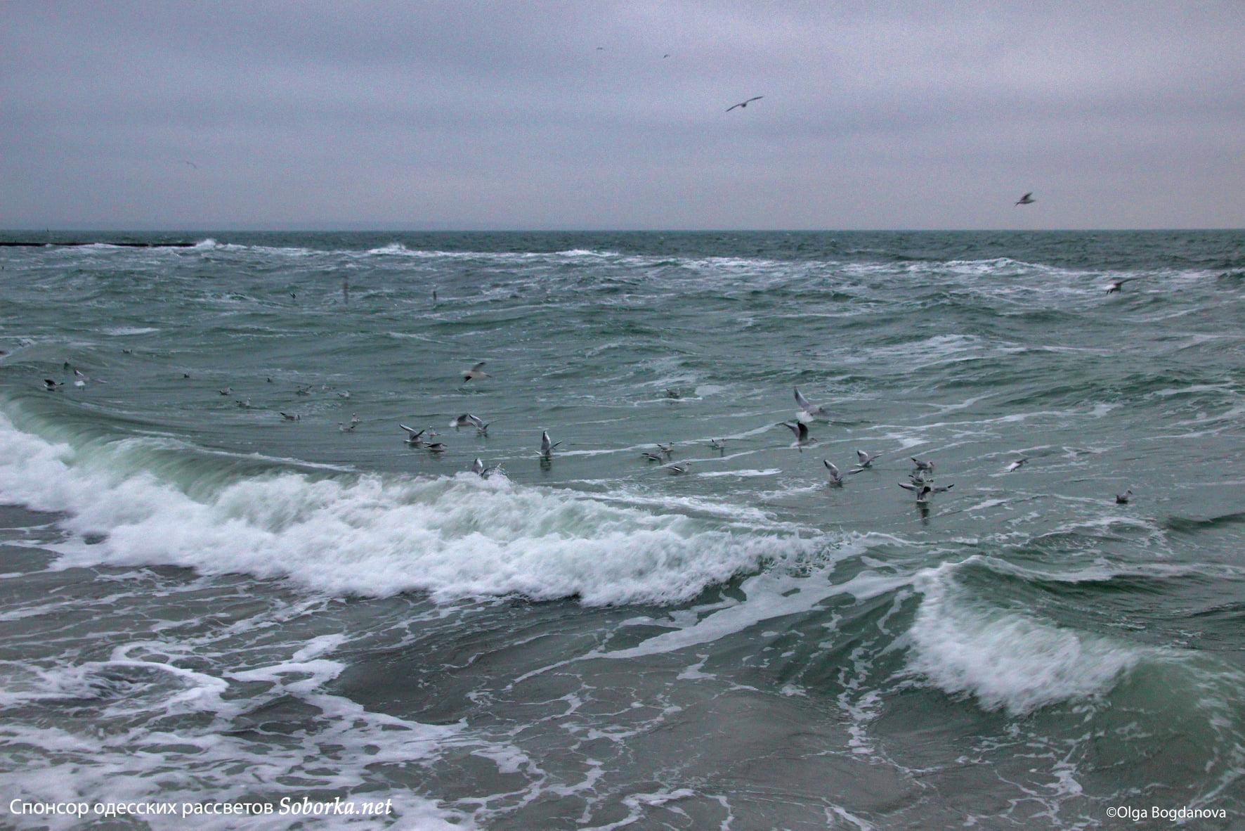 Зимнее море в Одессе. Фото: Ольга Богданова