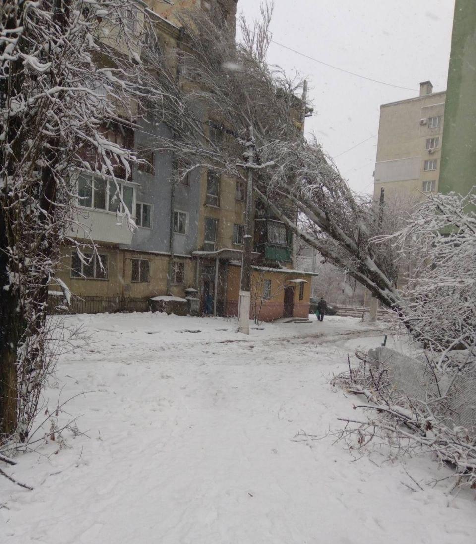 Дерево упало на дом. Фото: 1 канал