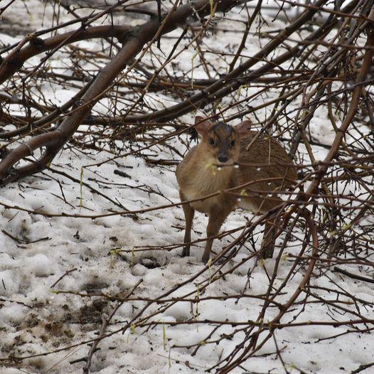 В Одесском зоопарке родился необычный олень: полюбуйся малышом. Фото: Одесский зоопарк