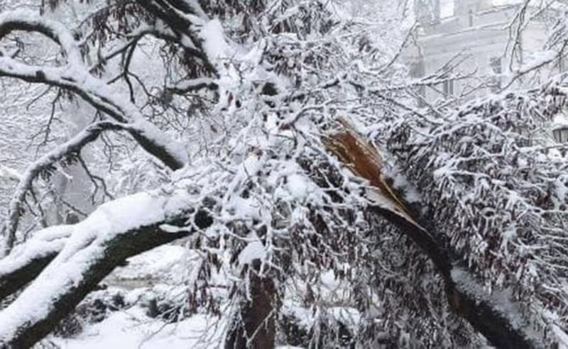 """Не выдержало снегопада: в Одесском горсаду сломалось иудино дерево. Фото: """"УСИ"""""""