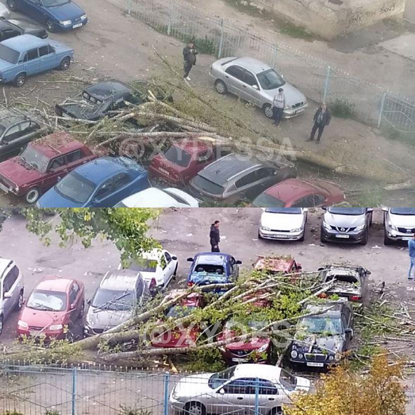 Утро не задалось: на одесской парковке упавшее дерево придавило десяток авто фото