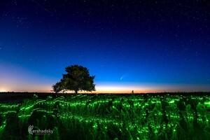 Увидим еще нескоро: одесситы продолжают наблюдать за летящей кометой фото 2