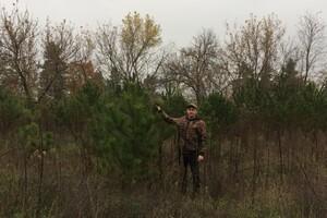 В Одесской области начали продавать новогодние елки: какие цены фото