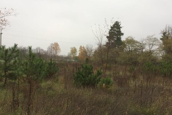 В Одесской области начали продавать новогодние елки: какие цены фото 2
