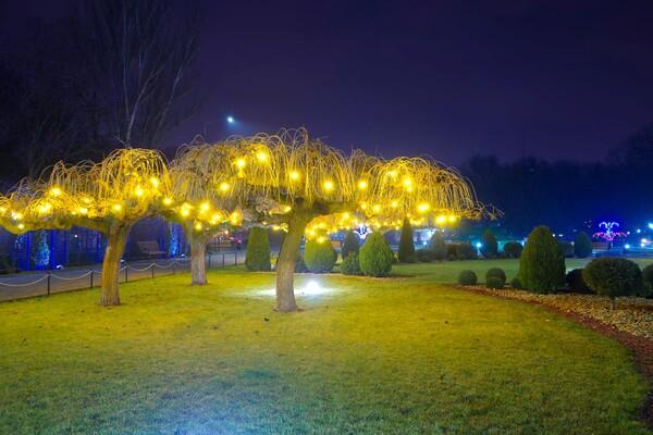 Полюбуйся ночными огнями: одесский парк украсили к Новому году фото 3