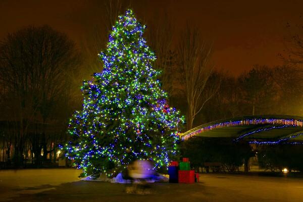 Полюбуйся ночными огнями: одесский парк украсили к Новому году фото 6
