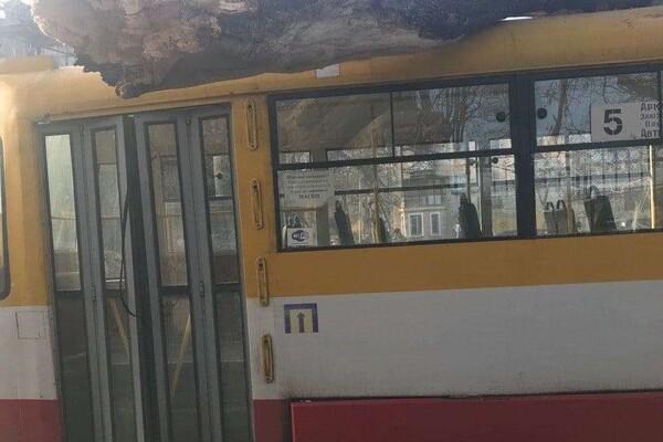 Ветреный день: в двух районах Одессы трамваи привалило деревьями фото