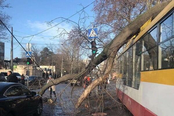 Ветреный день: в двух районах Одессы трамваи привалило деревьями фото 1