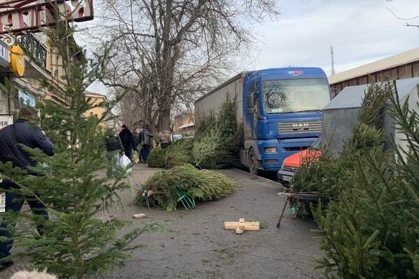 За день до Нового года: почем елки и украшения на Новом рынке фото 1