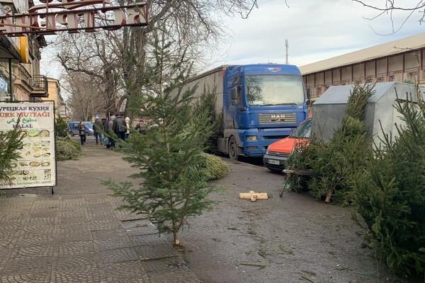 За день до Нового года: почем елки и украшения на Новом рынке фото 4
