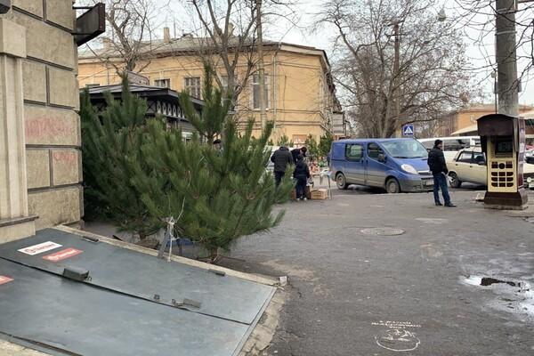 За день до Нового года: почем елки и украшения на Новом рынке фото 8