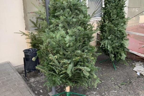 За день до Нового года: почем елки и украшения на Новом рынке фото 10