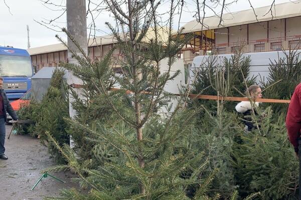 За день до Нового года: почем елки и украшения на Новом рынке фото 12