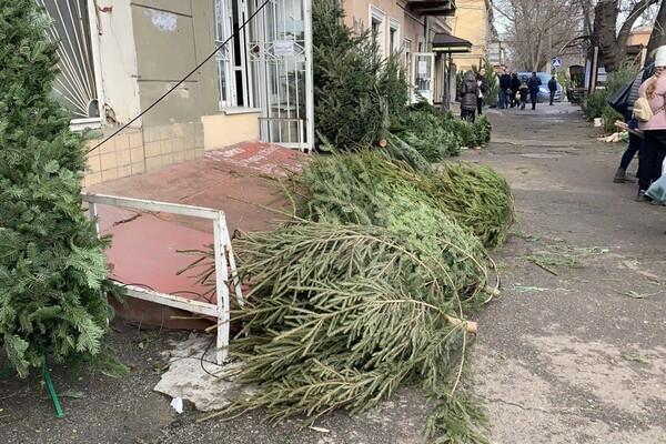За день до Нового года: почем елки и украшения на Новом рынке фото 20