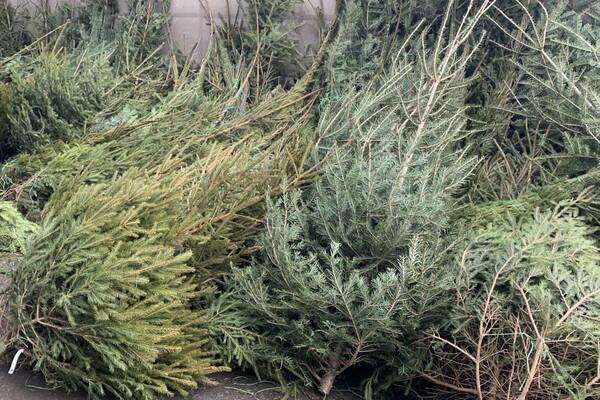 За день до Нового года: почем елки и украшения на Новом рынке фото 25
