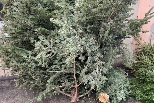 За день до Нового года: почем елки и украшения на Новом рынке фото 26