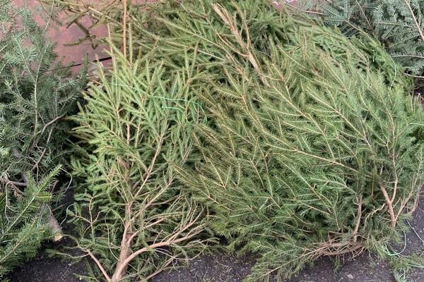 За день до Нового года: почем елки и украшения на Новом рынке фото 27