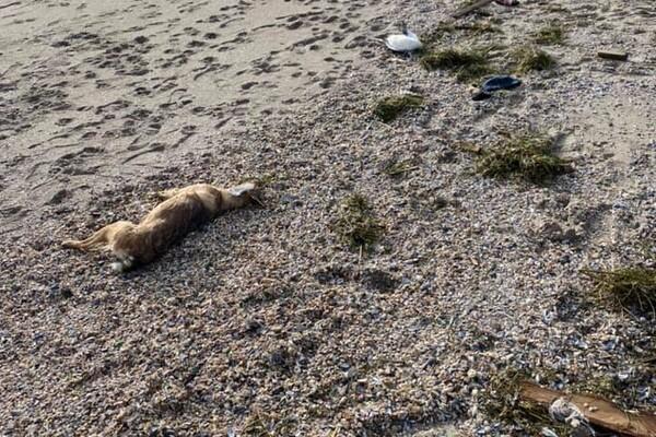 Развлеклись: из-за новогодних салютов в Одессе погибли животные фото