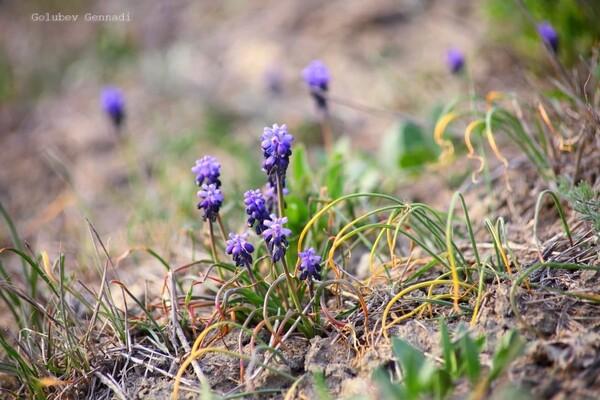 Тепло, как весной: на побережье Куяльника распустились цветы фото 1