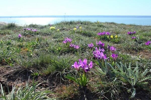 Тепло, как весной: на побережье Куяльника распустились цветы фото 4