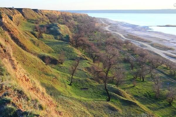 Тепло, как весной: на побережье Куяльника распустились цветы фото 6