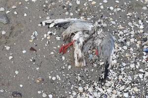 Еще одни жертвы фейерверков: на одесском причале нашли мертвых птиц фото 1
