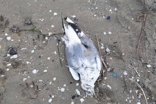 Еще одни жертвы фейерверков: на одесском причале нашли мертвых птиц фото 3