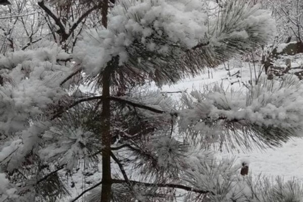 Ждем: Одесскую область уже заснежило фото 9