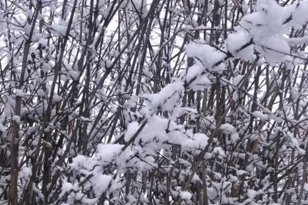 Ждем: Одесскую область уже заснежило фото 10