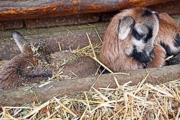 Первые в этом году: в Одесском зоопарке родились детеныши фото