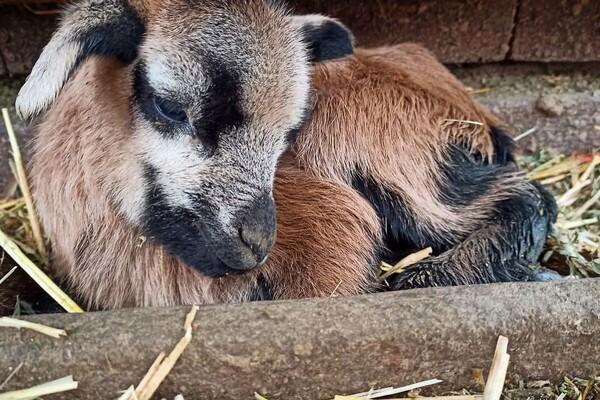 Первые в этом году: в Одесском зоопарке родились детеныши фото 1