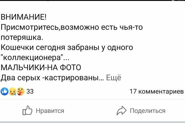В Одессе заметили подозрительного мужчину: он похищает котов фото