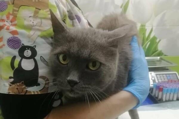 В Одессе заметили подозрительного мужчину: он похищает котов фото 1