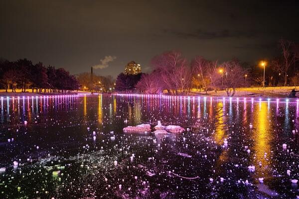 Красота рядом: смотри, как выглядит ночной парк Победы зимой фото