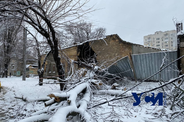 Последствия стихии: в Одессе упавшее дерево разрушило часть дома (обновлено) фото 2