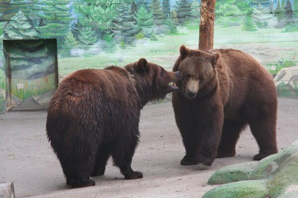 Голосование: в Одесском зоопарке выбирают самую красивую пару  фото 4