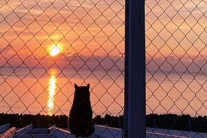 Морозные закаты и рассветы: в Одессе наблюдали алый небосвод фото