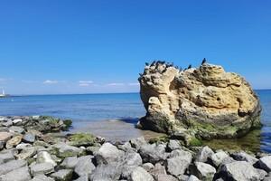 Полюбуйся: на побережье Одессы пенсионер создал пляж для птиц фото