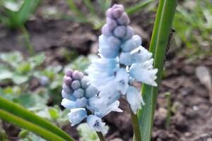 Полюбуйся: в Одесском ботаническом саду уже вовсю цветут весенние растения фото
