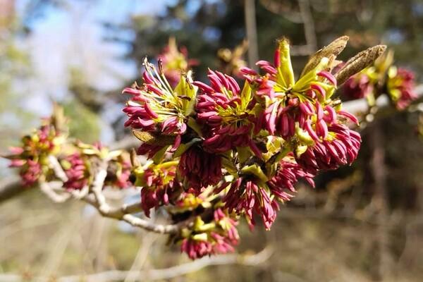 Полюбуйся: в Одесском ботаническом саду уже вовсю цветут весенние растения фото 2